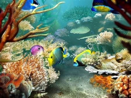 Tropical Fish 3D Screensaver v 1.2 build 8 Final (2013) EXSite.pl